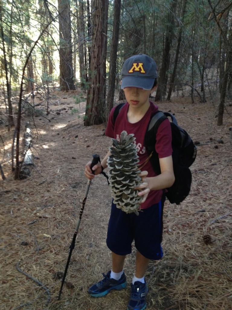 We left the main trail, headed to the base of the west side of the dome.  Everything is big including the pine cones!  About the size of a large kidney tumor.